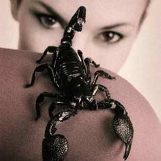Скорпионы и секс